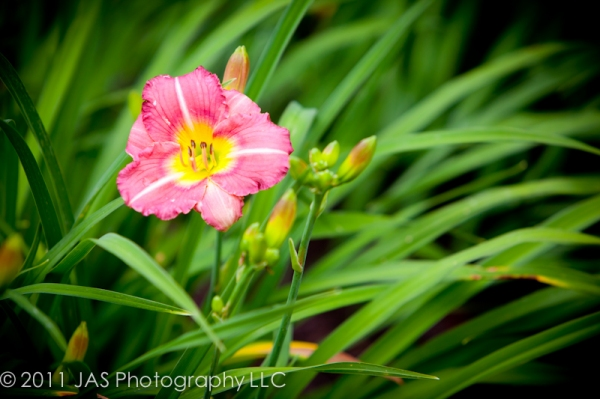 vibrant pink flower in bed of green grass
